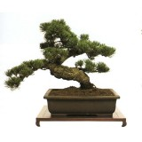 bonsai_product_01