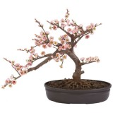 bonsai_product_03