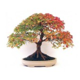 bonsai_product_07