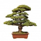 bonsai_product_08