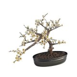 bonsai_product_10
